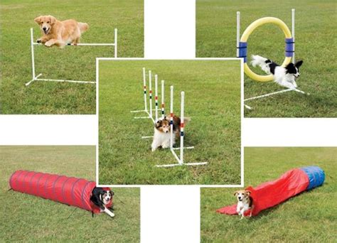 agility course for dogs agility course breeds picture