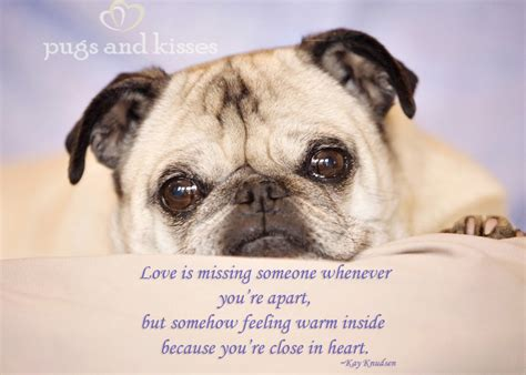 pug lover pug quotes quotesgram