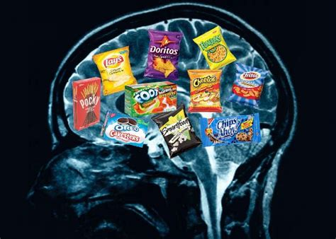 your brain on and the emerging science of addiction books how diet affects brain function revealed in studies