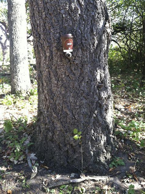 minnesota seasons rocky mountain douglas fir