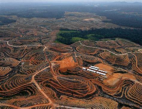 amazon indonesia el ni 241 o will make indonesia s deforestation even worse