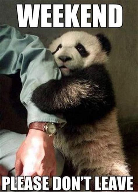 Cute Panda Memes - weekend please dont leave me funny quotes cute memes