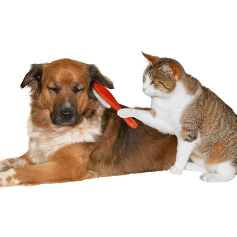 dog and cat house grooming grooming your cat montgomery animal hospital