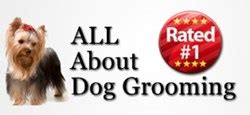 learn to groom dogs start a grooming business with learn to groom