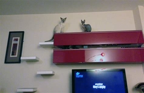 easy catification cat climbing shelves with style