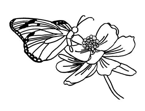 free butterfly coloring pages butterfly visiting flower