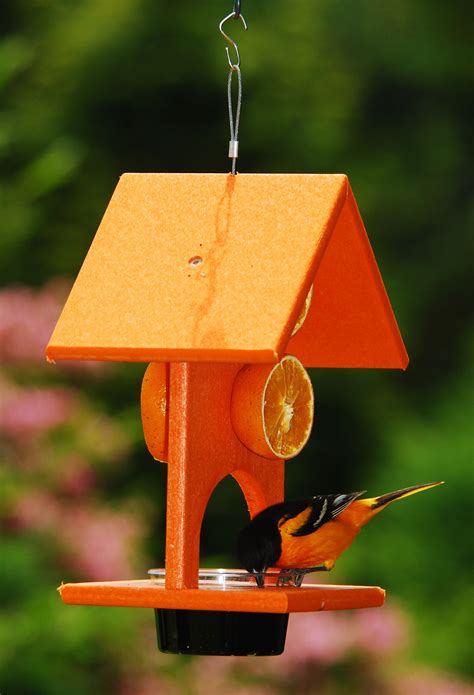 songbird essentials fruit jelly oriole bird feeder