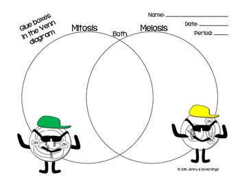 meiosis vs mitosis venn diagram mitosis vs meiosis venn diagram by math in demand tpt