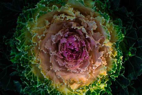 alimentazione tumori alimentazione e tumori una dieta scorretta causa il 35