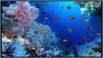 Free 3d Fish Tank Screensaver   hnczcyw.com