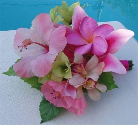 fiori di ibisco fiori di ibisco fiori delle piante caratteristiche dei