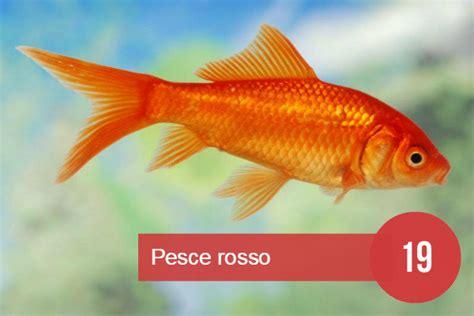 vasca pesce rosso sognare dei pesci 232 generalmente un sogno positivo e vitale