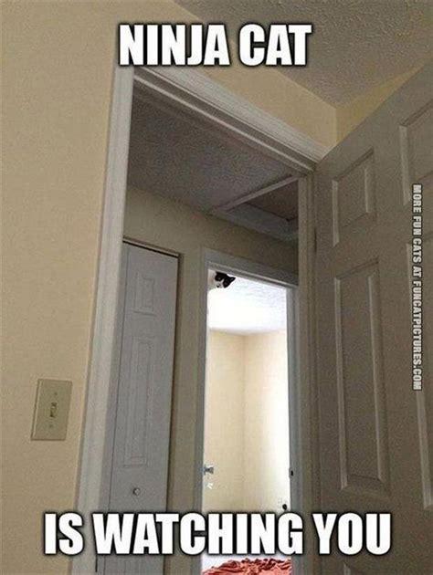 Sneaky Cat Meme - ninja fun cat pictures