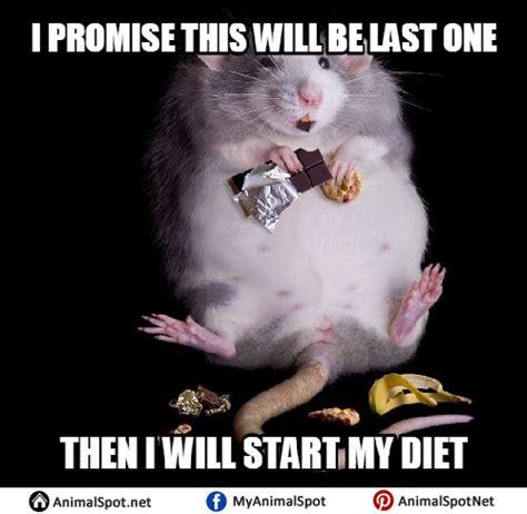 Mouse Meme - mouse memes