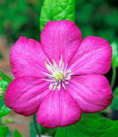 fiori di agosto in edicola dal 23 luglio casa in fiore di agosto cose di