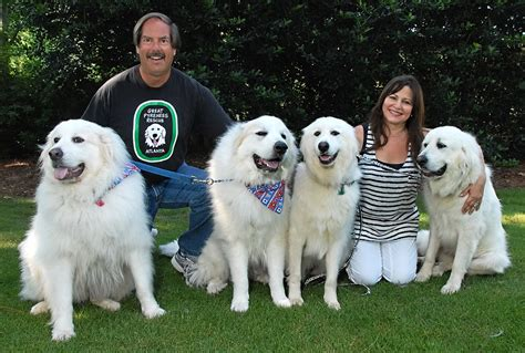 great pyrenees rescue provides wonderful dogs to good homes pin by karen carswell on alice great pyrenees