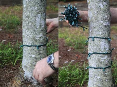 how to wrap lights around a tree 118 best light display images on