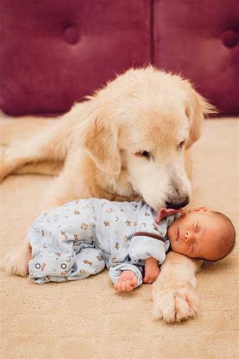 golden retrievers and children 10 reasons why you should never own golden retrievers