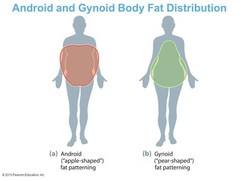 android pattern fat distribution understanding body composition ppt video online download
