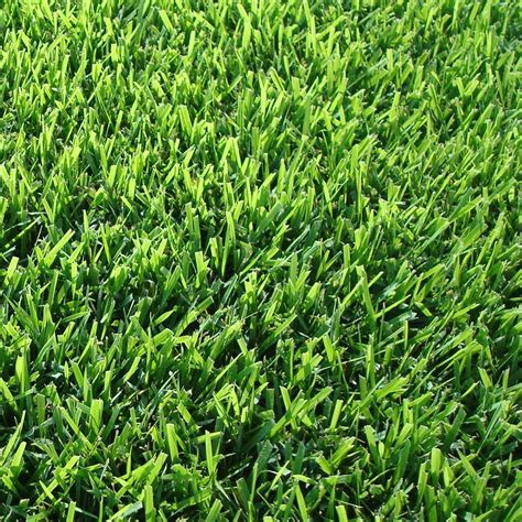 harmony zoysia sod 500 sq ft 1 pallet hh500z1 the