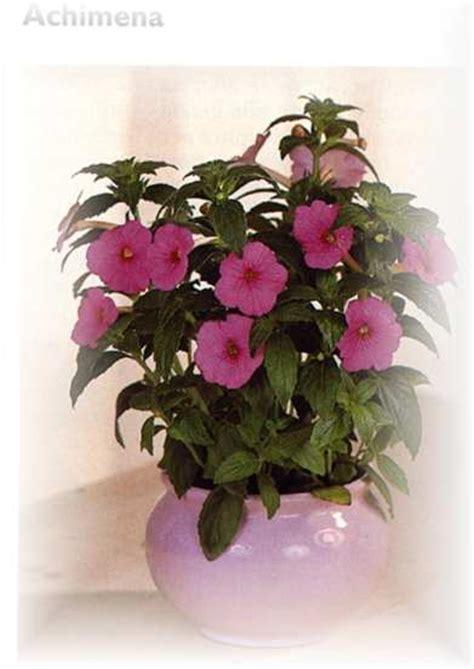 piante autunnali fiorite piante invernali fiorite piante ricadenti da appartamento