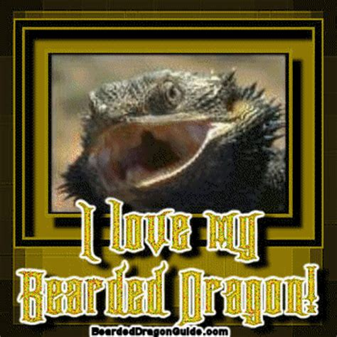 bearded dragon graphics & comments