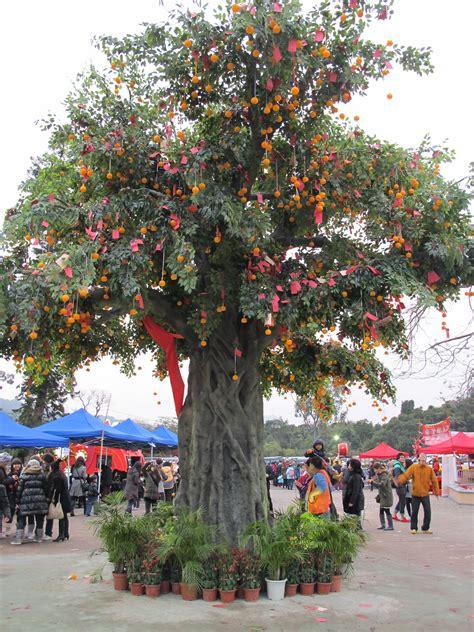 lam tsuen wishing tree new year file lam tsuen new wishing trees jpg