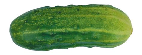 Cucumber PNG Free Clipart On The Web