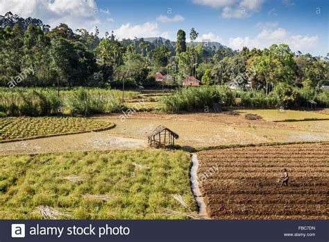 conservation agriculture in subsistence farming global farm platform
