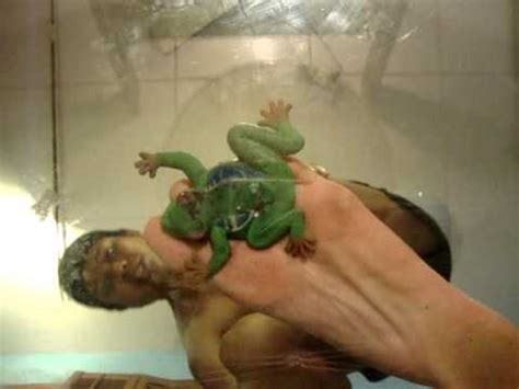 frog crush fetish porn tube