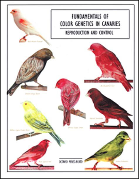 color explained a breeder s perspective books pin canaries gloster canary on