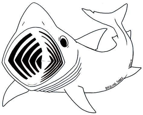 shark fin coloring page shark fin cartoon cliparts co