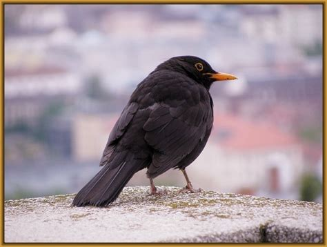 imagenes variadas de toda clase toda clase de aves del mundo archivos imagenes de pajaros