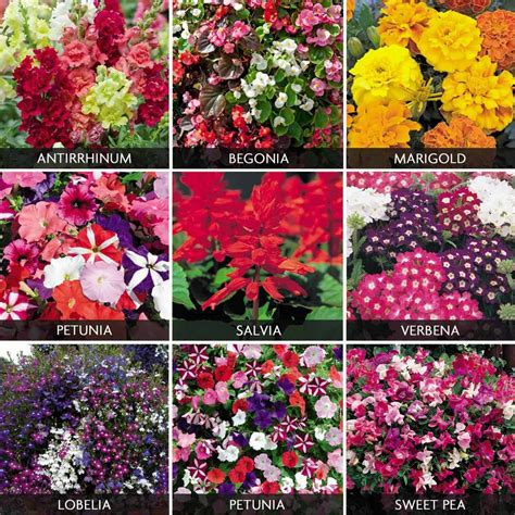 summer bedding collection annual flowers summer bedding