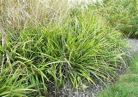 whirlpool im garten 229 pflanzen in nanopics steinbogen im garten ideen pflanzen