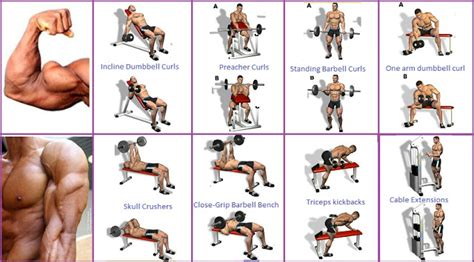 best workout program best bicep workout program to guarantee the biceps