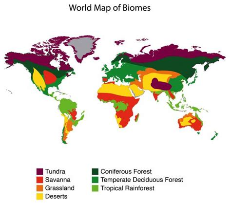 map world biomes tropical rainforests my cyberwall