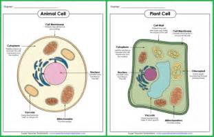 check out these animal and plant cell posters from super