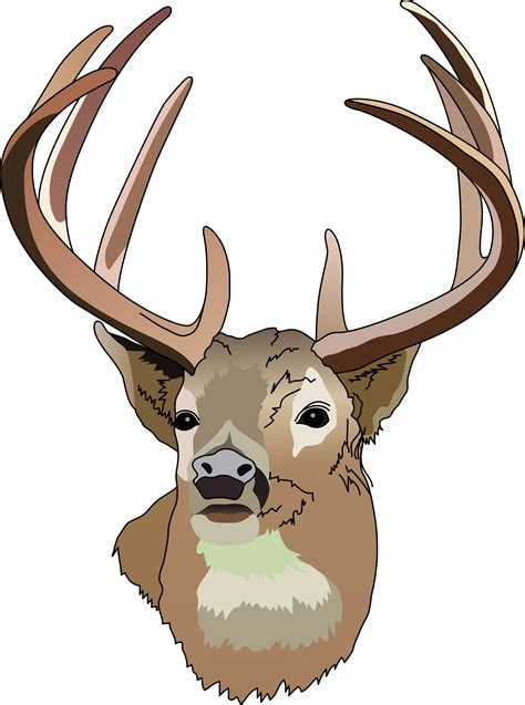 clip deer whitetail deer clip images clipart panda free