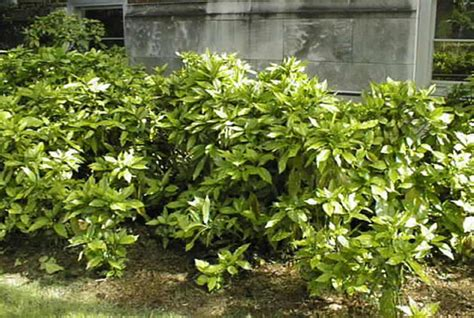 garden tips january february hawthorn nurseries landscaping ltd
