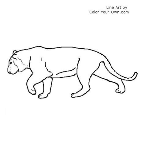 coloring page of a siberian tiger free coloring pages of siberian tiger