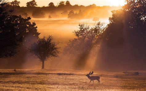 deer landscape deer sunset landscape wallpaper 1920x1200 12647