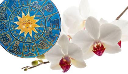 oroscopo dei fiori oroscopo dei fiori qual 232 la pianta toro leitv