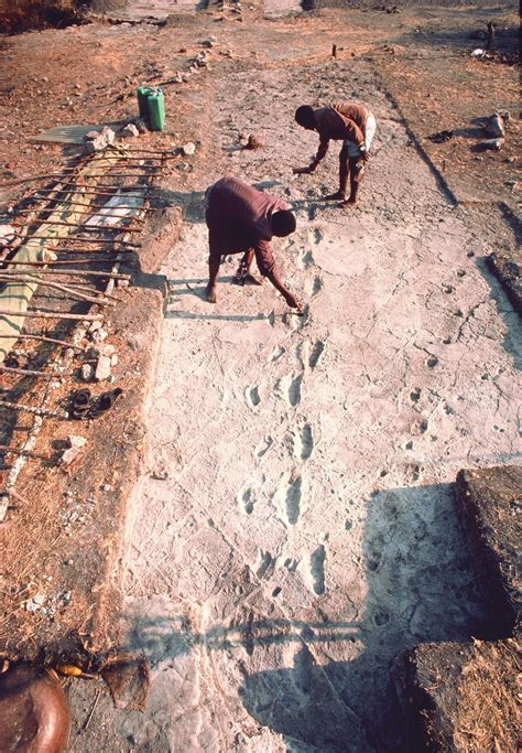 the ponemah years walking in the footsteps of my books shorties 3 7 million year australopithecus footprints