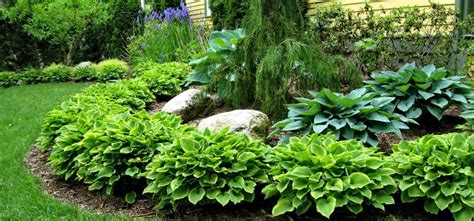 Landscape Ideas With Hostas Landscape With Hostas Hosta Garden Reder Landscaping