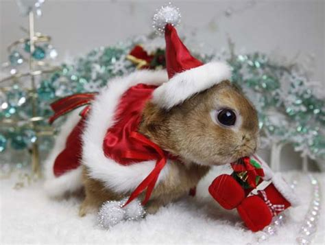 images of christmas rabbits beautiful animals in christmas photography 20 photos of