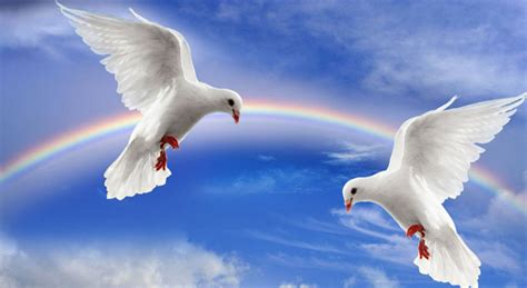 dove images wallpapers photos symbol of peace 2018