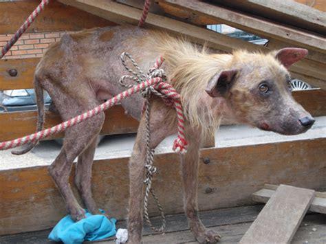 imagenes de animales maltratados paremos el maltrato animal galer 237 a