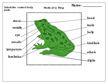 anatomy of eye frog body parts and functions a s head ppt