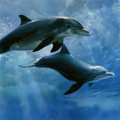 large paper print bottlenose dolphins the swell
